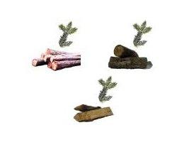 Drewno opałowe - zdjęcie