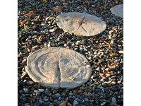 Płyta tarasowa DREWNO OGRODOWE ALTUS - zdjęcie
