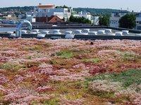 Dachy zielone - zdjęcie