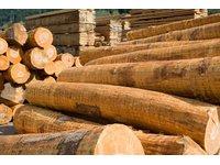 Drewno budowlane - zdjęcie