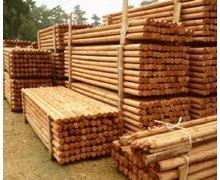 Palisady drewniane - zdjęcie