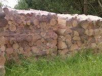 Drewno: wałki - buk, brzoza - zdjęcie